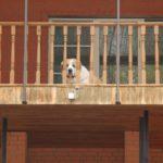 Безопасность загородной недвижимости