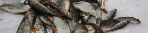 Способы привлечения рыбы
