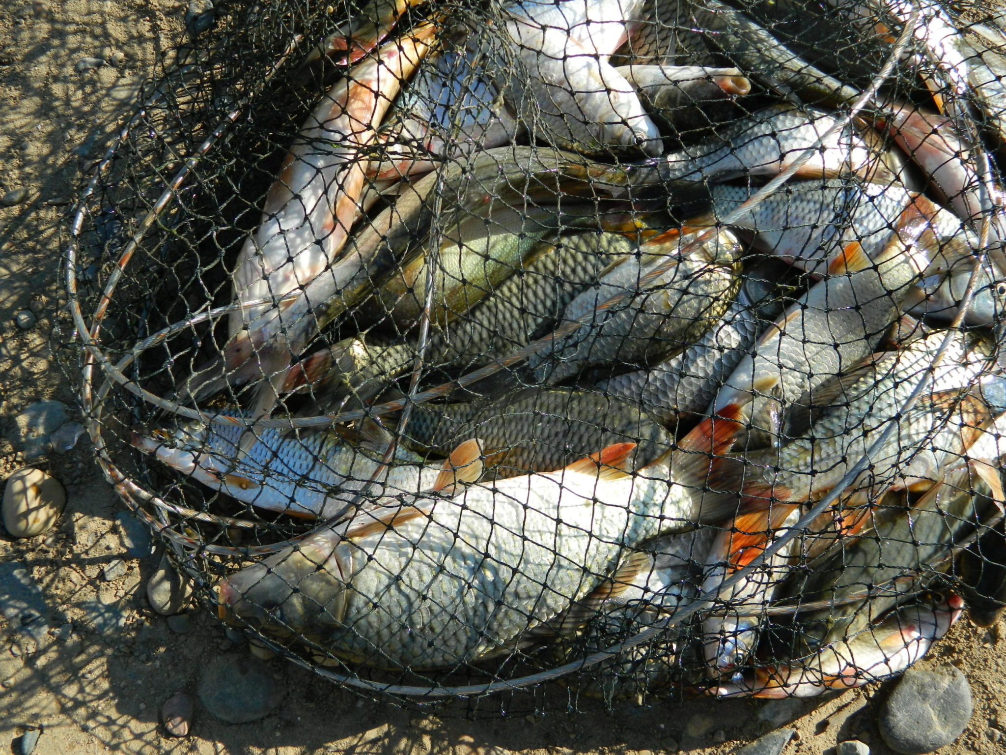 В разных прудах и рыба разная