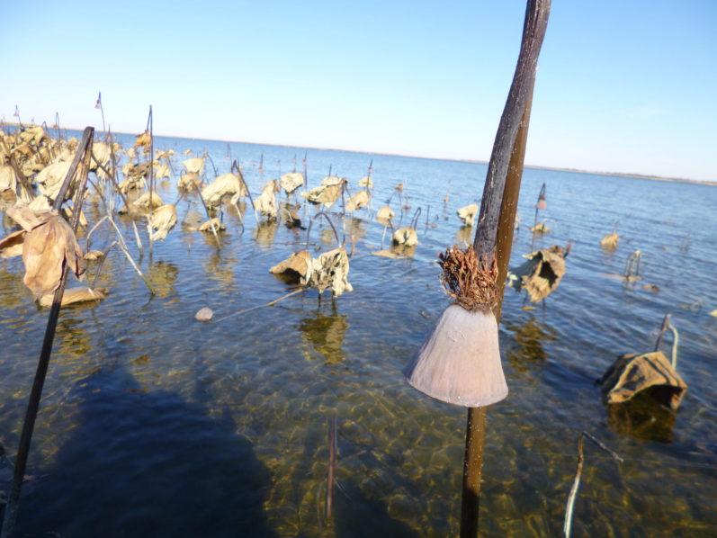 рыболовные базы кирсановкого хозяйства