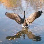 Перехитрить умную птицу