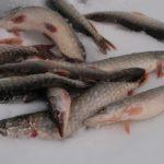 Секрет рыболова. Зимняя пробежка при ловле на жерлицы