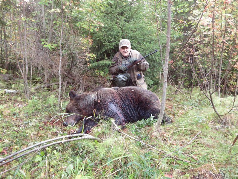 охота на медведя, охота на овсах, охота, медведь,