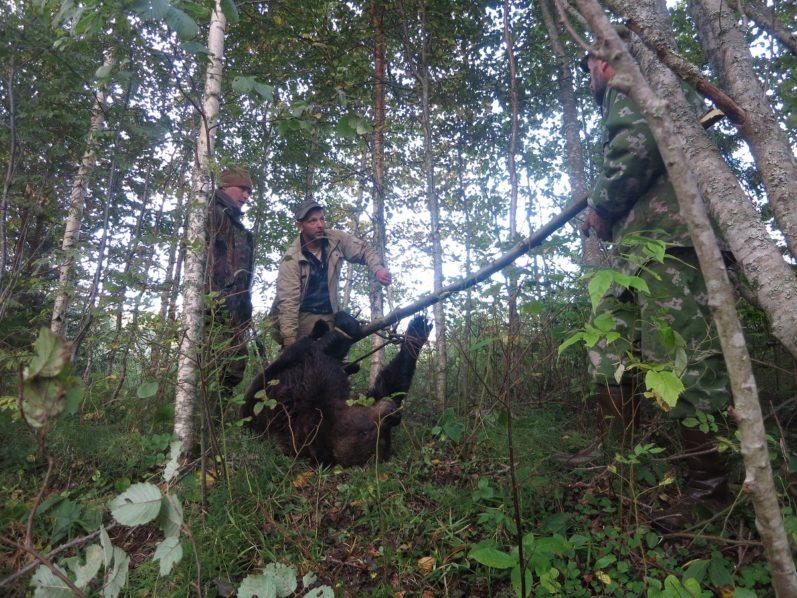 на овсах на медведя