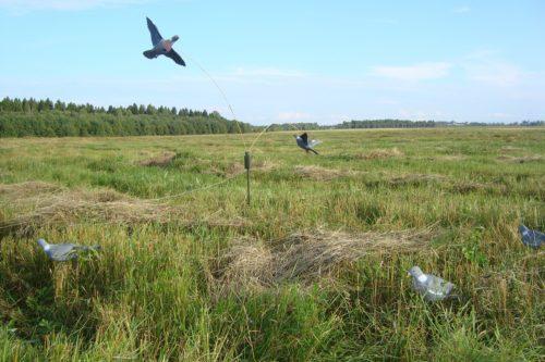охота на голубей,