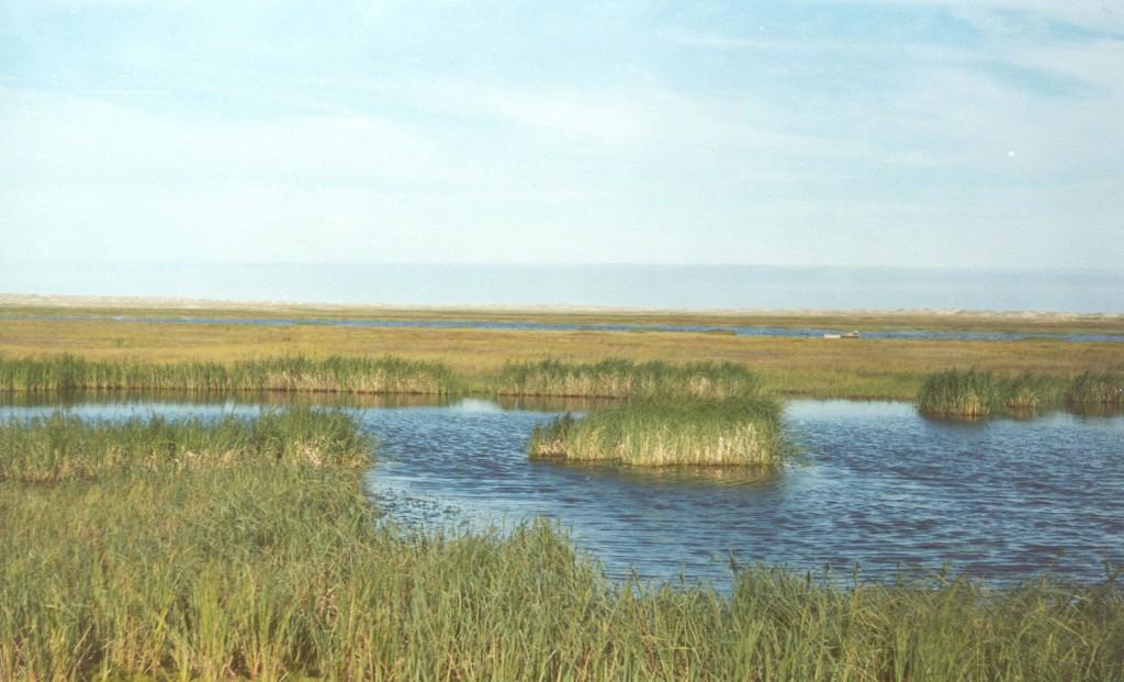 такие озёра типичны для тундры. фото а.с. стениной