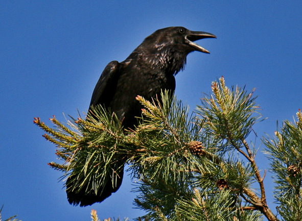 Птица из песни